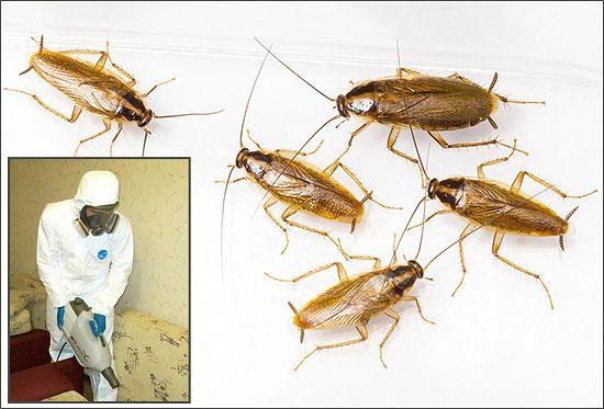 Little bug-uri în apartament: motivele pentru apariția și metodele de luptă