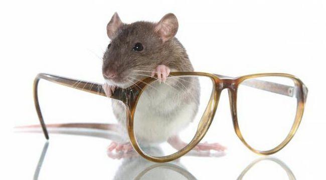 Interpretarea termenului de șobolan clerical