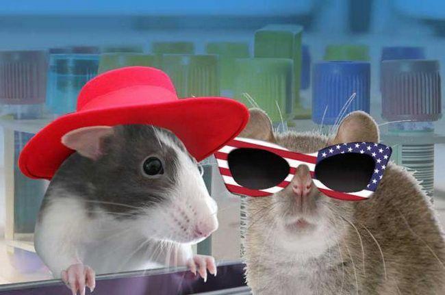 Papetărie șobolan