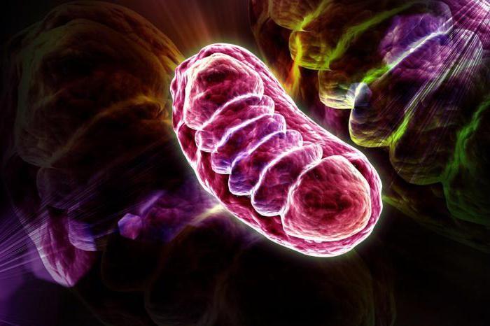 Sindromul mitocondrial