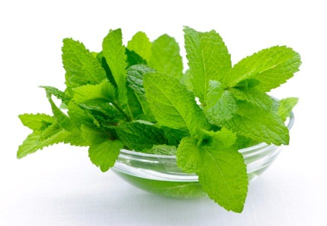 proprietățile medicinale ale unei plante