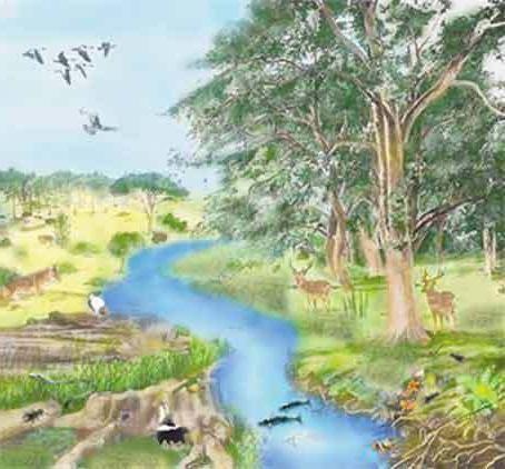 sistem de acțiune pentru starea mediului înconjurător