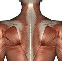 funcția musculară trapezius