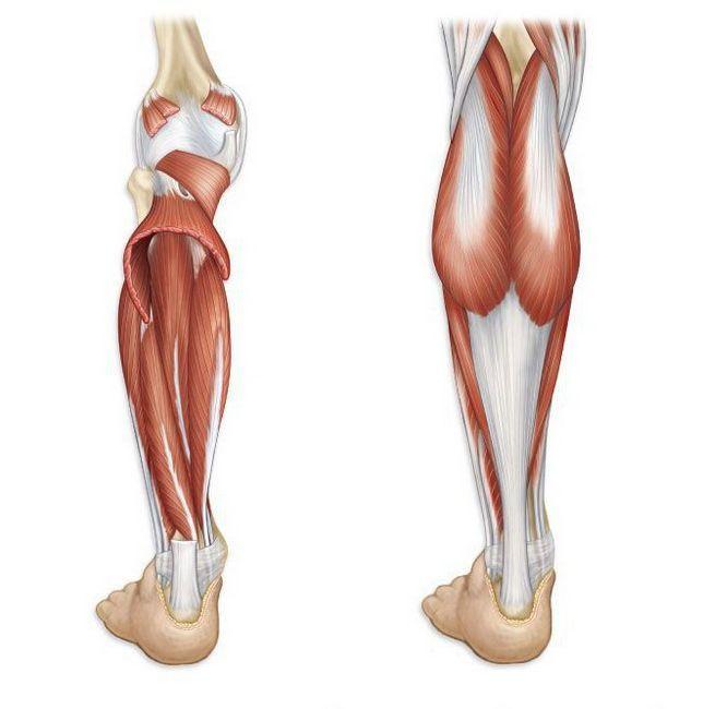 Mușchi picior fotografie