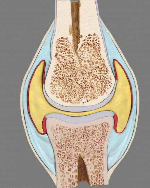полуподвижное соединение костей