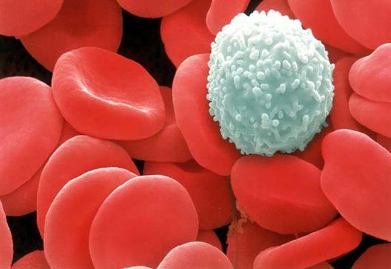 norma de testare a sângelui la femeile leucocite