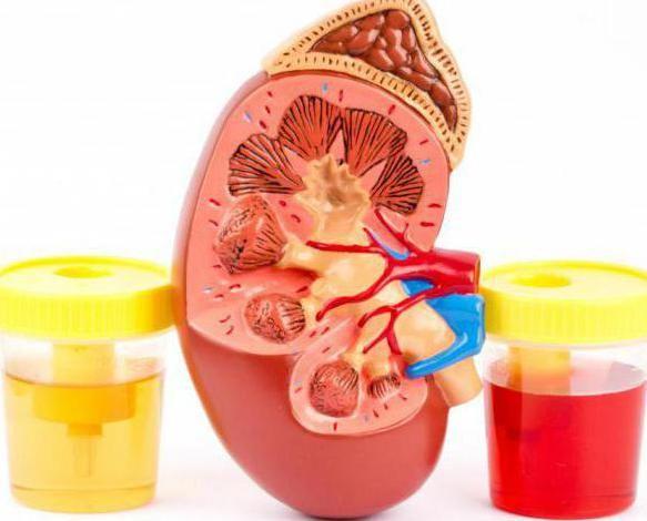 norma eritrocitelor în urină la bărbați