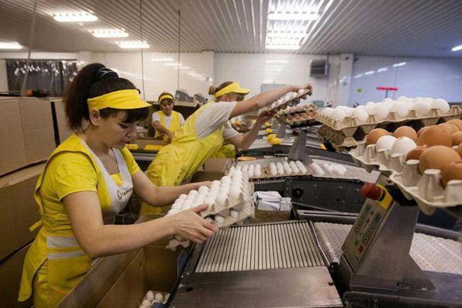 новосибирские птицефабрики