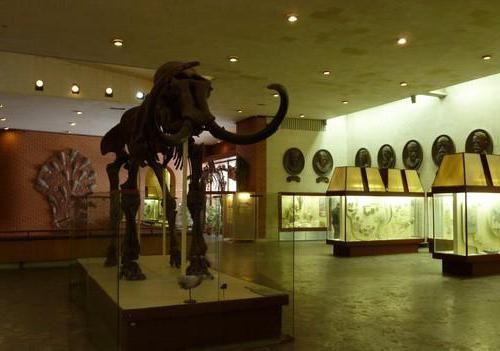 Dinosaur Park Photo