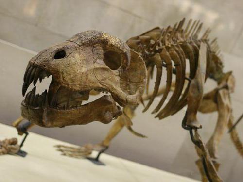 parc de dinozauri la Moscova pe
