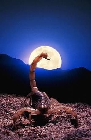 luna într-un scorpion pentru un bărbat