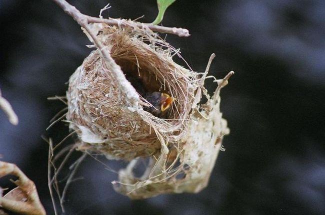 Explicați copiilor de ce este imposibil să distrugeți cuiburile de păsări
