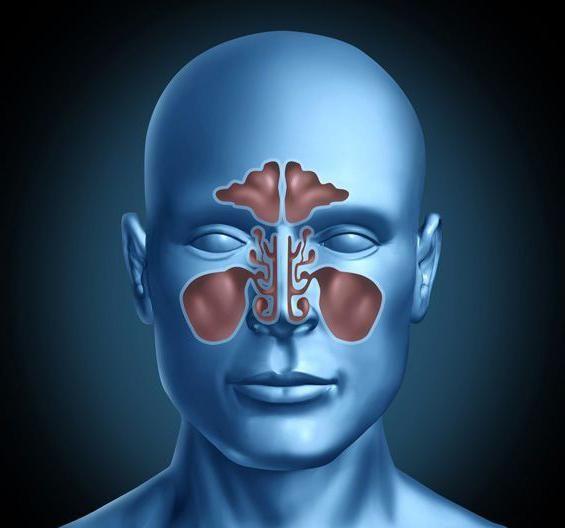 nasul și sinusurile paranasale