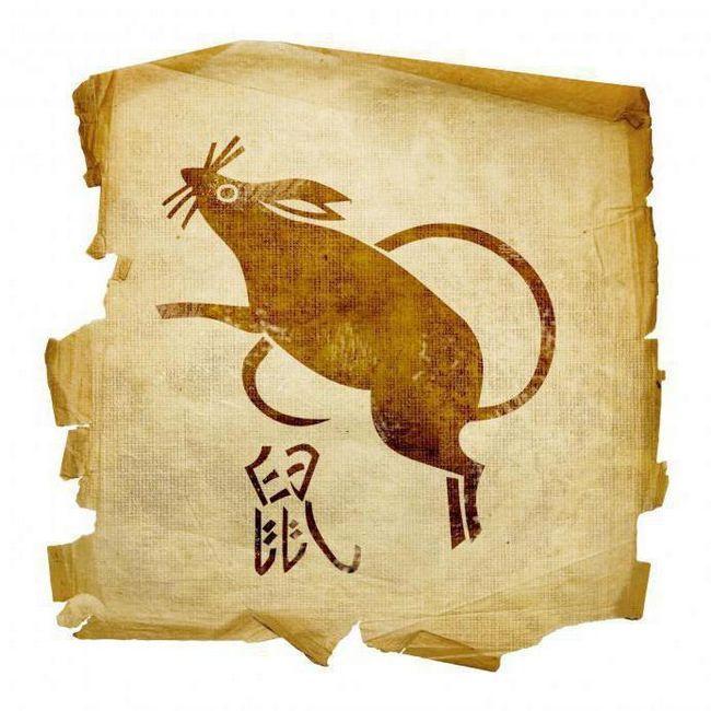 șobolan șobolan