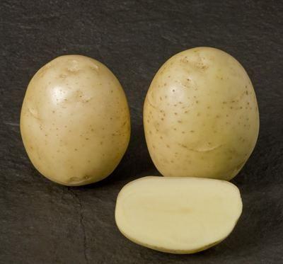Cartofi de cartofi Nevsky