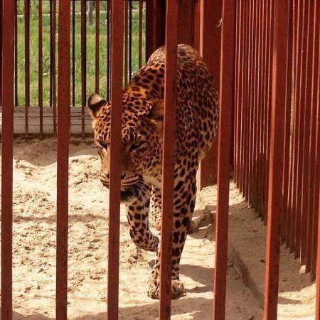 Vechiul Oskol Zoo program de lucru