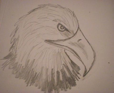 cum să deseneze un vultur