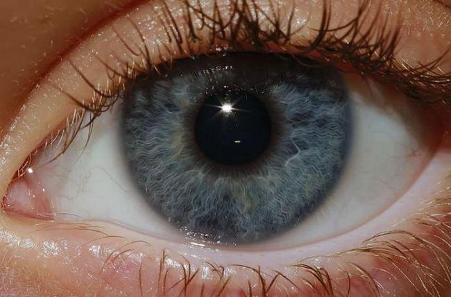 organ de viziune