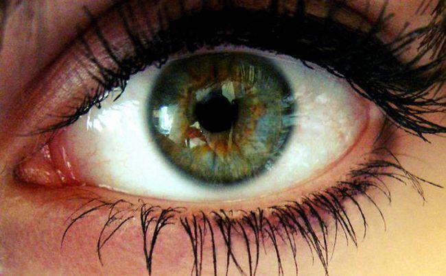 organul de viziune este