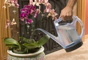 ce apă de apă de orhidee