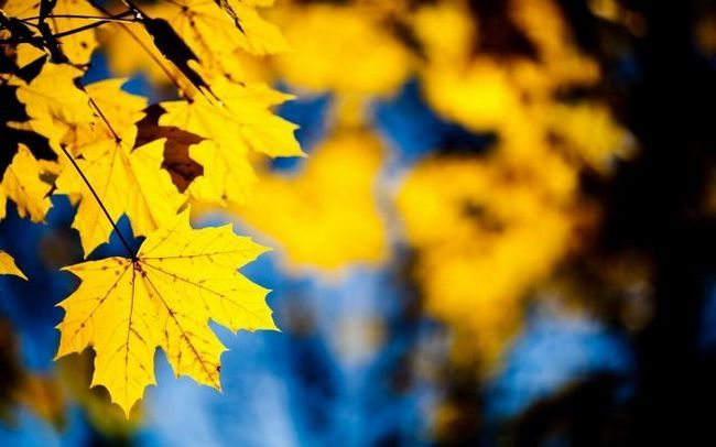 Toamna frunze - mesageri de aur de toamnă
