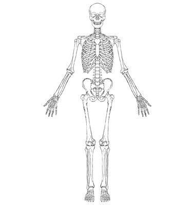 semigrile cartilaginoase formează baza scheletului