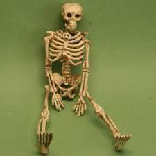 schelet imagini