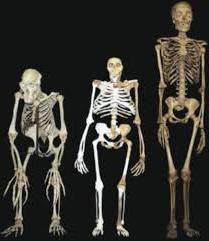baza scheletului uman
