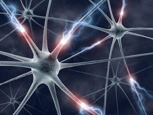 tipuri de celule nervoase