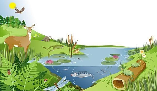 Sustenabilitatea ecosistemului