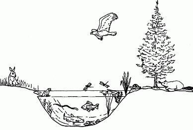 Factorii de stabilitate a ecosistemelor