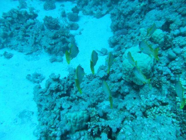 Se odihnește pe Marea Roșie. Care este mai bine, Hurghada sau Sharm el-Sheikh?
