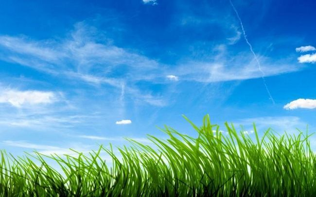 Răspundem la întrebarea de ce iarba este verde