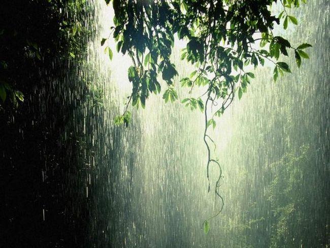 ploaia vine