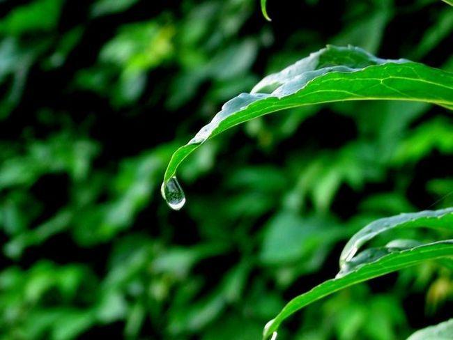 un jacuzzi de apă în natură