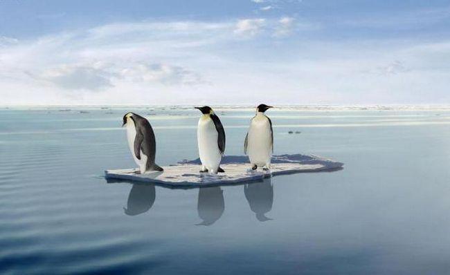 de ce gheața nu se scufunda în apă, ci plutește la suprafață
