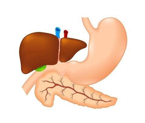 pancreasul produce