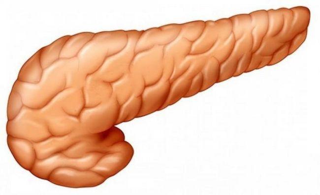 pancreasul nu produce enzime