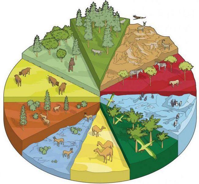 conceptul de specie în biologie