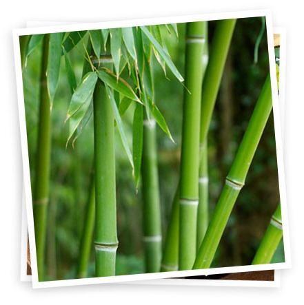 lenjerie de pat din bambus