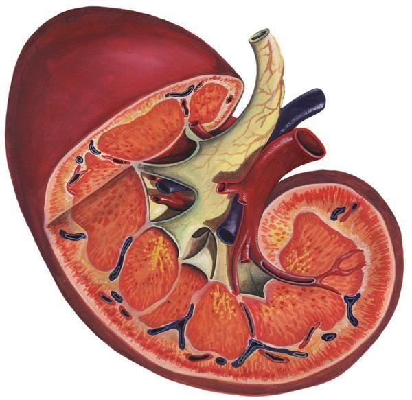 eritrocite crescute în urină