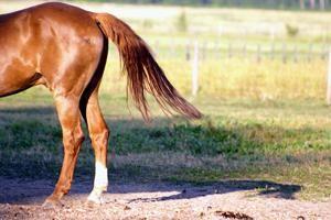 coadă de cal