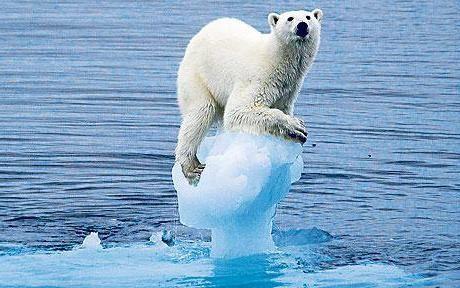 efectele schimbărilor climatice