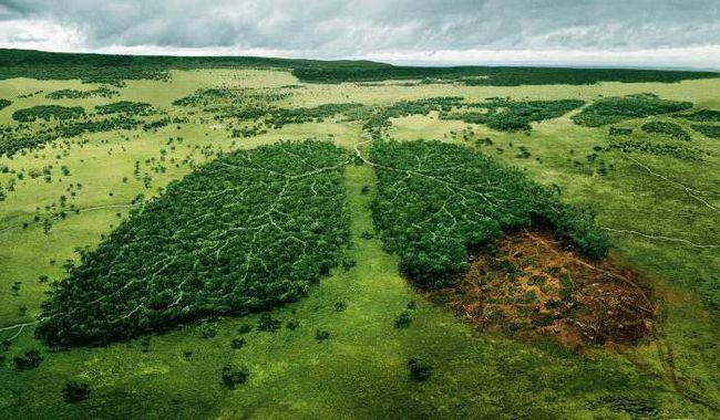 ecologia aplicată este