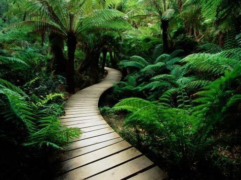 Calea ecologică a proiectului