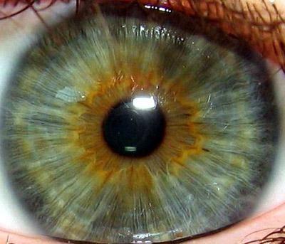 irisul ochiului