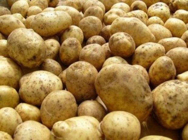 cartofi karatop devreme descriere soi foto recenzii