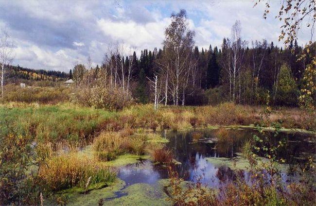 Povestirile lui Prishvin: o persoană are nevoie de natură