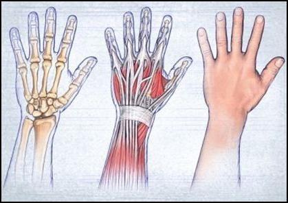 răsturnarea mâinilor