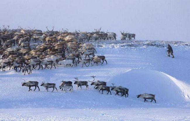 regiuni din Siberia și Orientul Îndepărtat